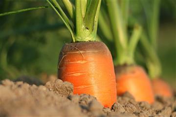 Экспортеры сельхозпродукции смогут получить льготные кредиты по нацпроекту