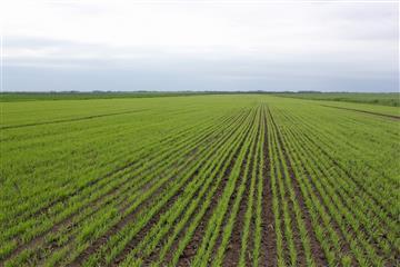 Россельхозцентр работает на продуктивность растениеводства