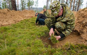 В рамках нацпроекта в Пермском крае высадили 20 тыс. сеянцев ели и кедра