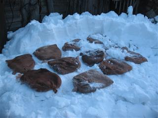 В Прикамье в рамках нацпроекта началась подготовка к лесокультурному сезону