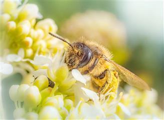 Поддержка Минсельхозпрода РТ помогла пчеловодам укрепить материальную базу и увеличить производство меда