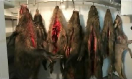 Прокуратура отменила отказ в возбуждении дела об охоте в нацпарке