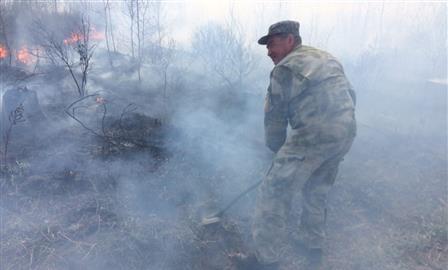 В Тольятти подозрение в поджоге городского леса пало на главного экоактивиста