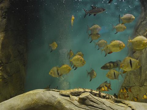 Каких животных можно увидеть в Самарском океанариуме