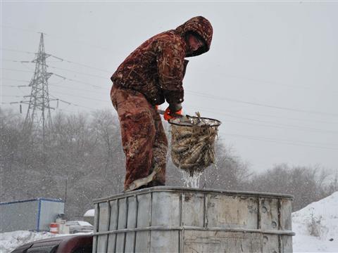 "400 килограммов живой щуки ""переехали"" в Волгу на ПМЖ"