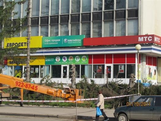 """Уголовное дело по факту вырубки елей возле ЦУМа """"Самара"""" не возбуждалось"""