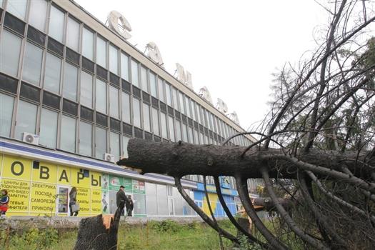 Предприниматели вероломно нарушили соглашение с администрацией города о том, что оставят 40-летние деревья в покое