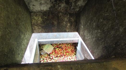 "В ""Ашане"" в ТЦ ""Космопорт"" уничтожено 900 кг яблок из Эквадора"
