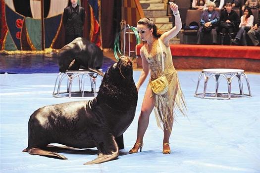Скорее всего, Самарский цирк опечатают на следующей неделе, когда выступления возобновятся, сказать пока невозможно.