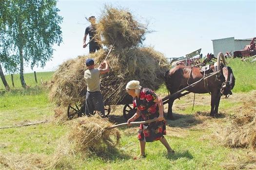 250 тысяч личных подсобных хозяйств Самарской области нуждаются в поддержке государства.