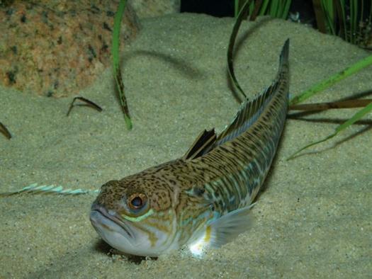 Самарца на рыбалке в Крыму уколола шипом ядовитая рыба