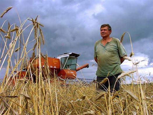 Ущерб, нанесенный засухой хозяйствам губернии, составил примерно 7 миллиардов рублей