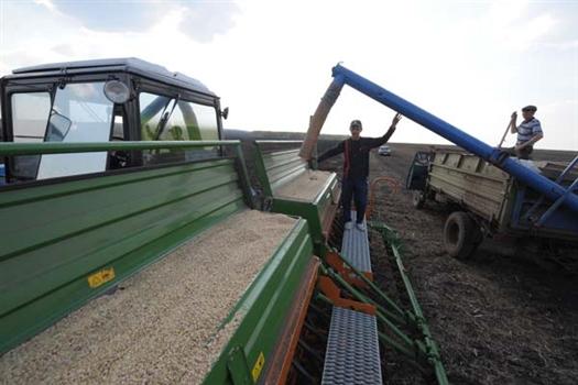 Несмотря на крайне неблагоприятные погодные условия, урожай озимых позволит обеспечить продовольственную безопасность региона.