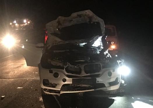 Водитель BMW насмерть сбил лося в Самарской области